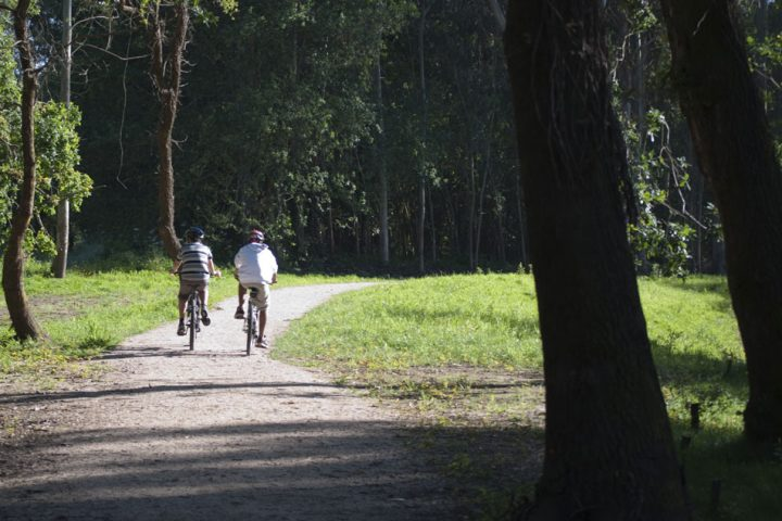 Ciclistas en zona boscosa