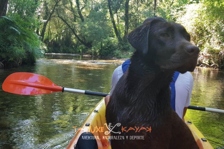 Perro montado en kayak por el río